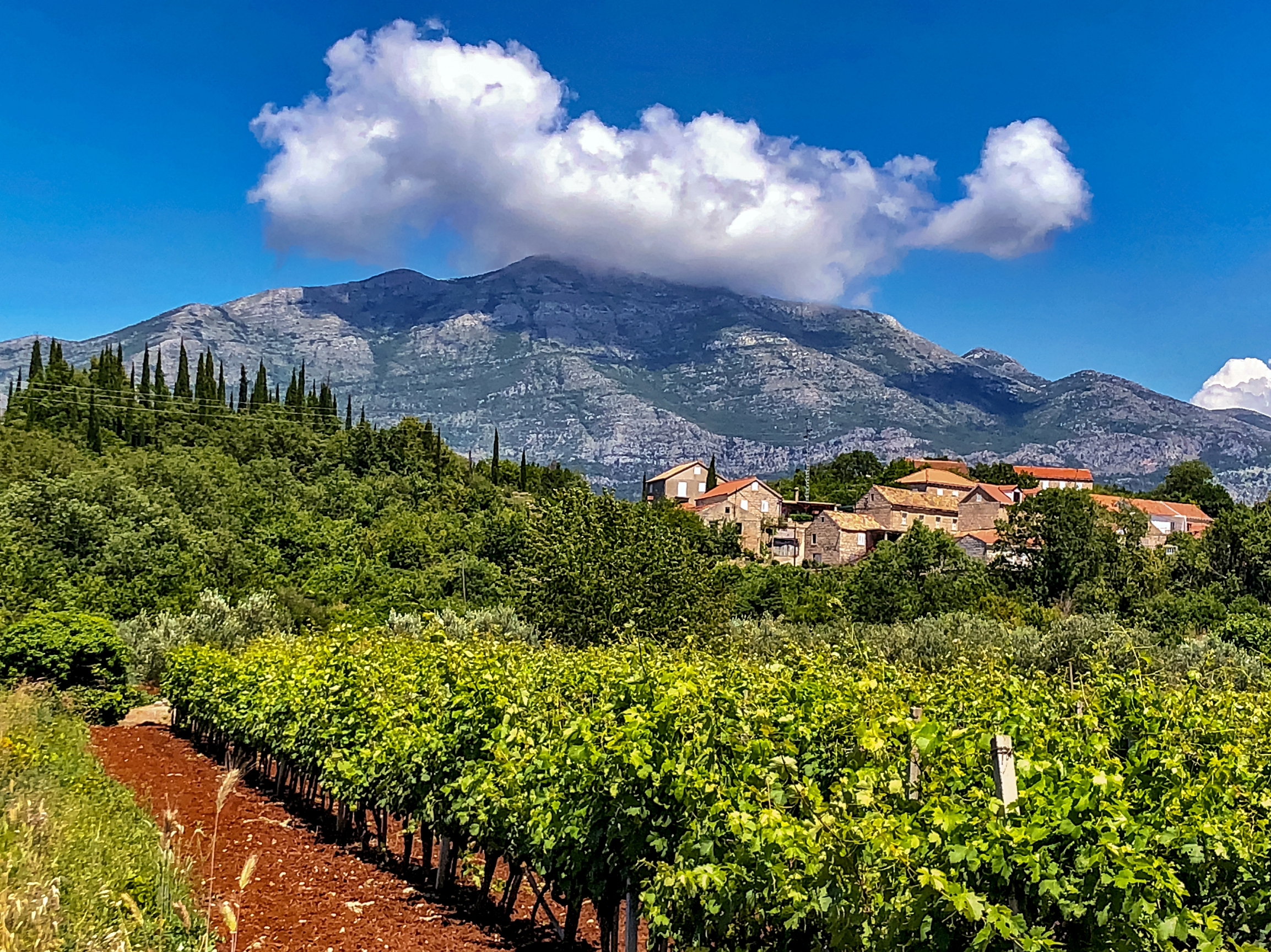 Visit Some of the Beautiful Vineyards in Croatia